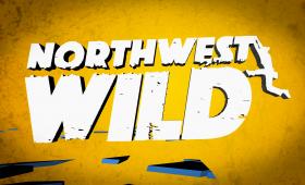 NW Wild